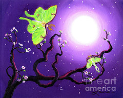 luna-moths-in-moonlight-laura-iverson.jpg